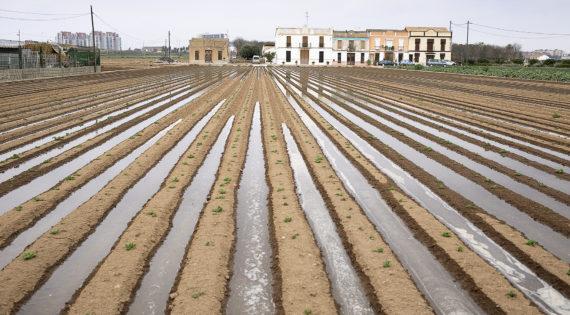 El regadiu històric de L'Horta Valenciana declarat Sistema Important del Patrimoni Agrícola Mundial (SIPAM)
