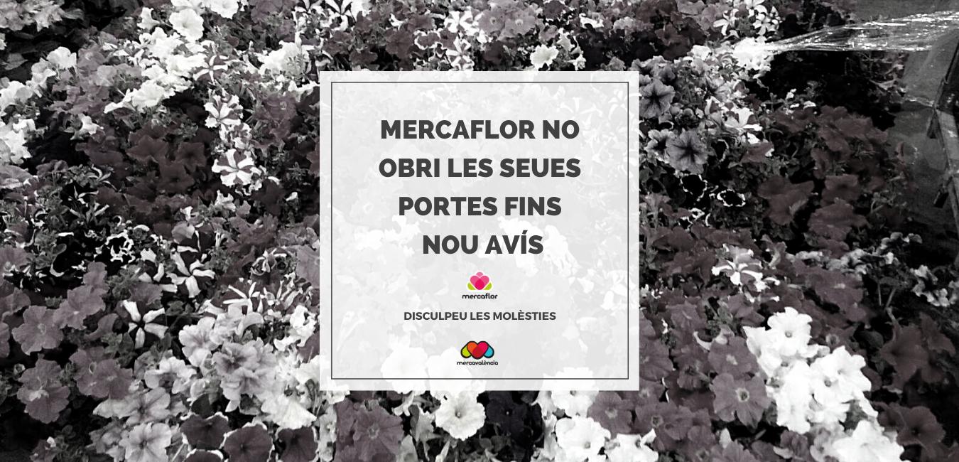 Mercaflor no obri les seues portes com a conseqüència de no passar a la Fase 1