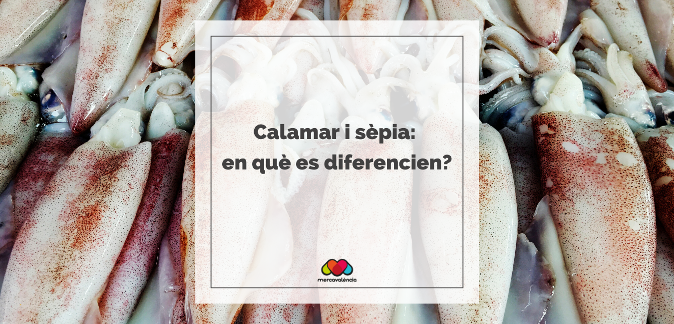 Calamar i sépia: quina és la diferencia?