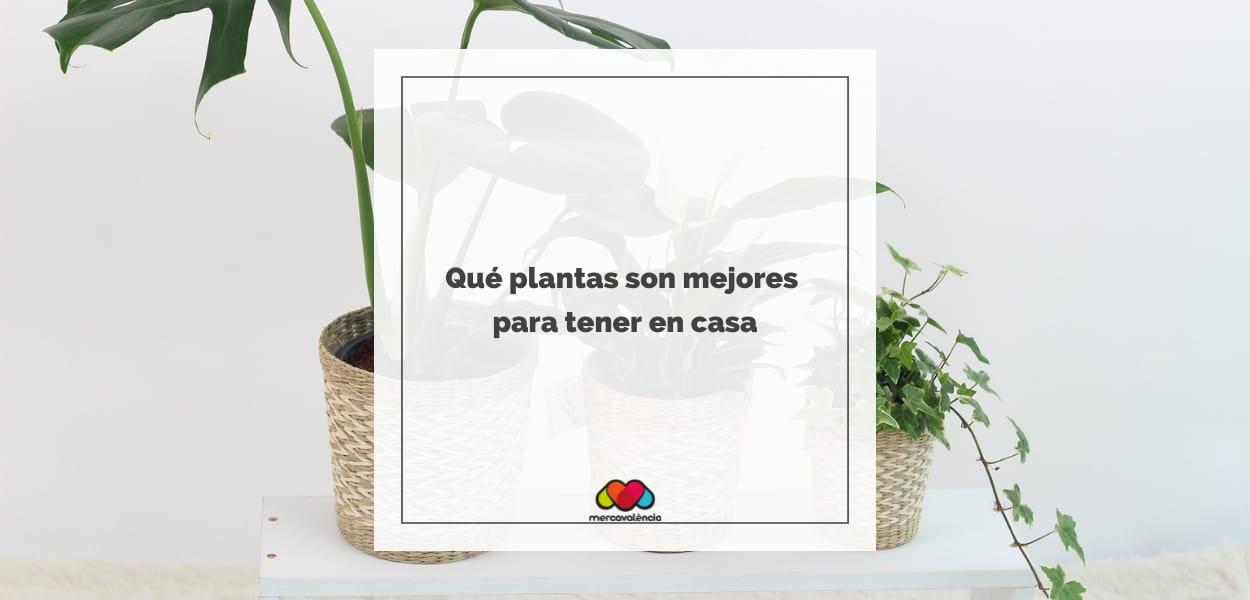 Qué plantas son mejores para tener en casa