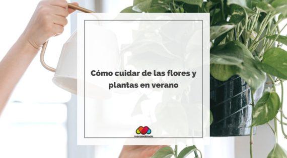 Cómo cuidar de las flores y plantas en verano