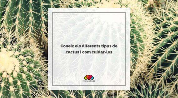 Coneix els diferents tipus de cactus i com cuidar-los